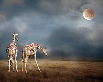 Photograph - Giraffes by Rebecca Cozart