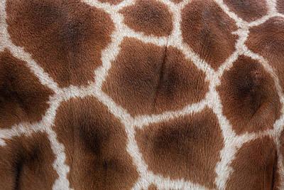 Giraffes Skin Texture Art Print by Andrew Dernie