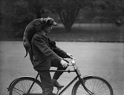 Dog Photograph - Give A Dog A Ride by Fox Photos