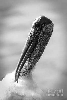 Photograph - Glamorous Wood Stork Portrait Black And White by Carol Groenen