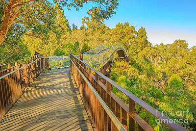 Photograph - Glass Bridge In King Park by Benny Marty