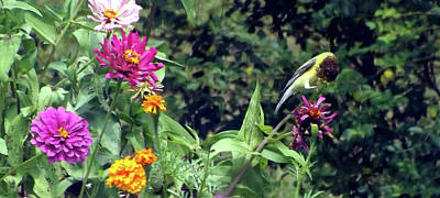 Belinda Landtroop Royalty-Free and Rights-Managed Images - Goldfinch Munch by Belinda Landtroop
