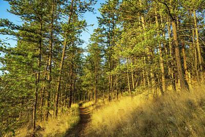 Photograph - Glenmore Highlands Trail by Dave Matchett