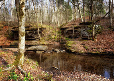 Photograph - Glenrock Branch by Susan Rissi Tregoning