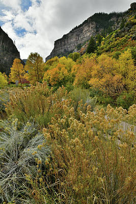 Photograph - Glenwood Canyon Fall Colors At Hanging Lake Exit by Ray Mathis