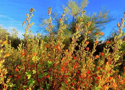 Photograph - Globemallows And Palo Verde by Judy Kennedy