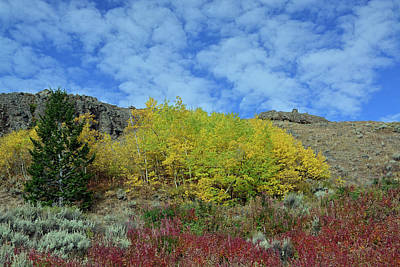 Photograph - Glorious Autumn Colors In Yellowstone National Park by Bruce Gourley