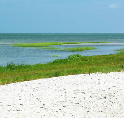 Photograph - Glowing Beach Grasses Cape Cod by Michelle Constantine