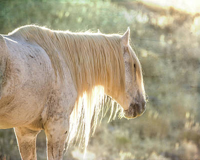 Photograph - Glowing by Mary Hone