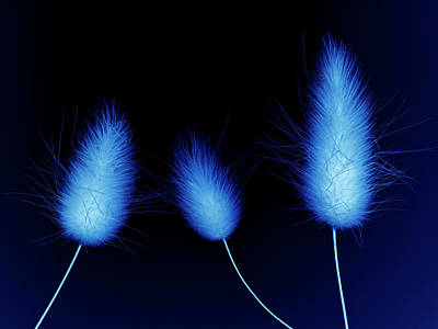 Blue Background Photograph - Glowing Monotone Blue Grass Flowers On by Garden Picture Library