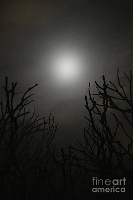 Digital Art - Glowing Moon On Foggy Night by Clayton Bastiani