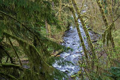 Photograph - Gnat Creek by Robert Potts