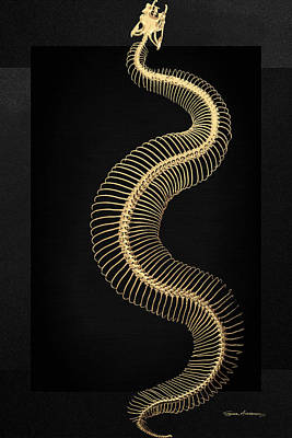 Digital Art - Gold Snake Skeleton Over Black Canvas by Serge Averbukh