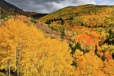 Photograph - Golden Aspens Bask In Evening Sunlight Along Last Dollar Road by Ray Mathis