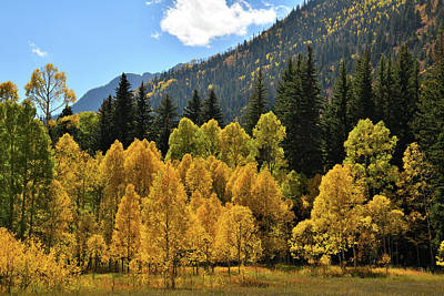 Photograph - Golden Aspens On The Road To Marble Colorado by Ray Mathis