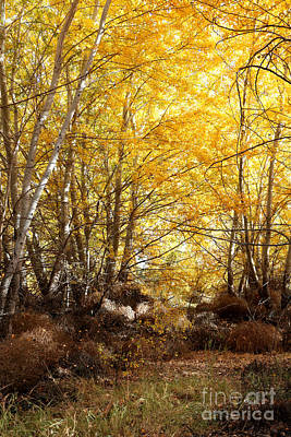 Photograph - Golden Autumn Light by Carol Groenen