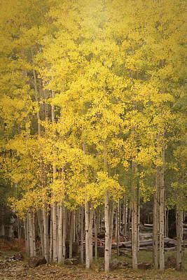 Photograph - Golden Autumn Memoirs  by Saija Lehtonen
