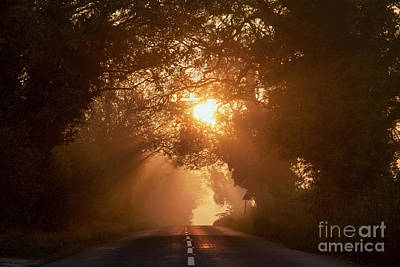 Photograph - Golden Autumn Misty Light by Tim Gainey