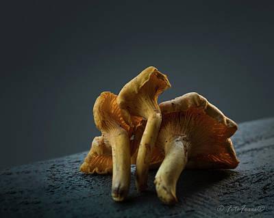 Photograph - Golden Chanterelle Mushroom by Alexander Fedin