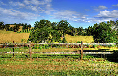 Photograph - Golden Countryside By Kaye Menner by Kaye Menner