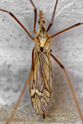 Photograph - Golden Crane Fly by KJ Swan