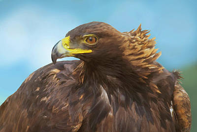 Photograph - Golden Eagle Majesty by Mark Miller