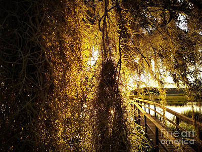 Photograph - Golden Entry by Robert Knight