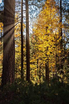 Photograph - Golden Fall Light  by Saija Lehtonen