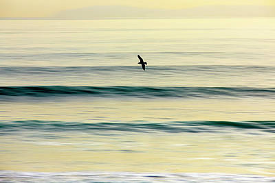 Photograph - Golden Glide by Sean Davey