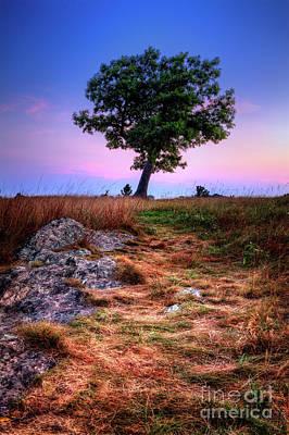 Photograph - Golden Grasses Of Autumn by Dan Carmichael
