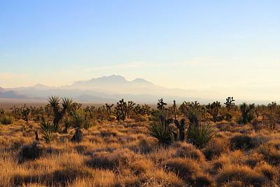 Photograph - Golden Hour In Mojave by Sagittarius Viking