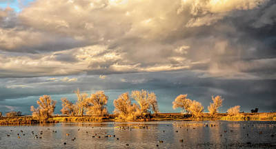 Photograph - Golden Hour In The Refuge by Cheryl Strahl