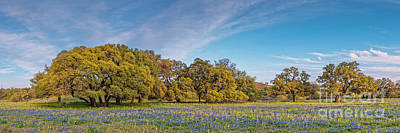Photograph - Golden Hour Light Bathing Oaks And Bluebonnets Fields - Willow City Loop Texas Hill Country by Silvio Ligutti