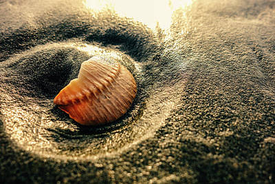 Photograph - Golden Hour Shell by Lost River Photography