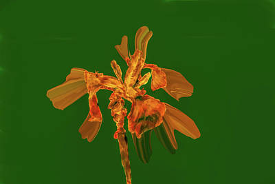 Digital Art - Golden Iris P #i2 by Leif Sohlman
