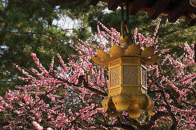 Photograph - Golden Lantern With Cherry Blossoms In by Philippe Widling / Design Pics