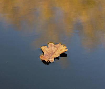 Golden Leaf On Water Art Print