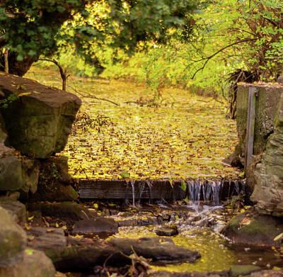 Photograph - Golden Leaf River by Scott Lyons