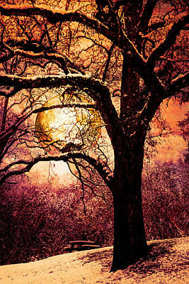 Photograph - Golden Moon In The Trees by Debra and Dave Vanderlaan