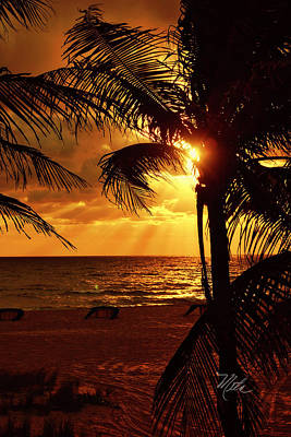 Photograph - Golden Palm Sunrise by Meta Gatschenberger