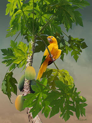 Digital Art - Golden Parakeet In Papaya Tree by M Spadecaller