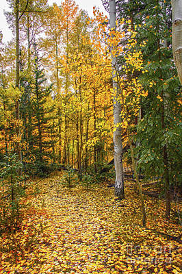Photograph - Golden Path by Susan Warren