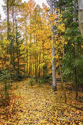 Photograph - Golden Path by Susan Warren