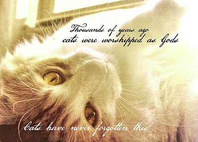 Photograph - Golden Quote by JAMART Photography