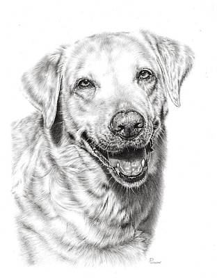 Animals Drawings - Golden Retriever by Casey