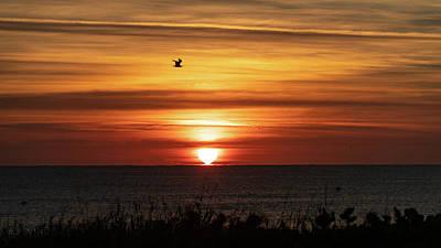 Photograph - Golden Seagull Sunrise Delray Beach by Lawrence S Richardson Jr
