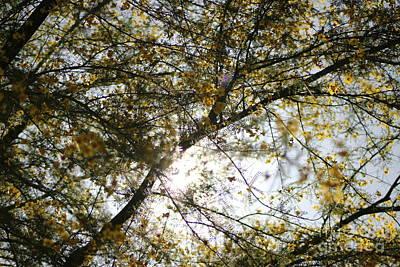 Photograph - Golden Skies by Colleen Cornelius