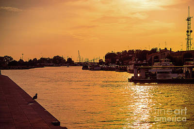 Photograph - golden sunset in Lido port.Silhouette by Marina Usmanskaya
