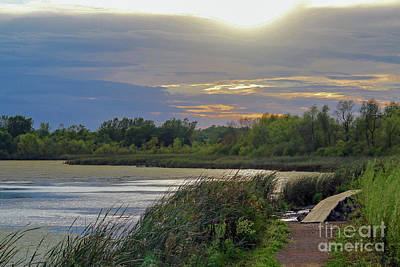 Photograph - Golden Sunset Over Wetland by Susan Rydberg