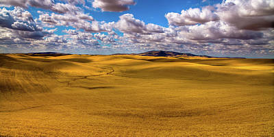 Photograph - Golden Wheat Fields by David Patterson